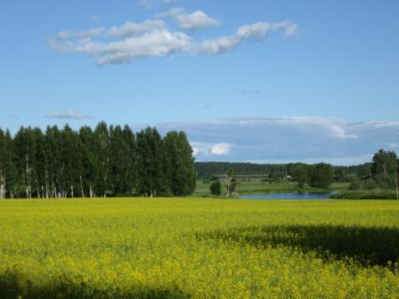 summertime in Sweden