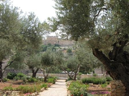 The Garden of Gethsemane in Israel